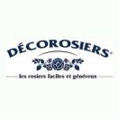 Rosier arbustif Decorosier® Vezuvia® 'Noare'