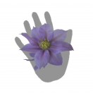 Clématite Bernardine™ 'Evipo061'