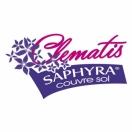 Clématite integrifolia SAPHYRA® Duo Rose 'Cleminov29'